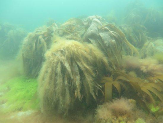 Wavecrest Scuba: Plant life