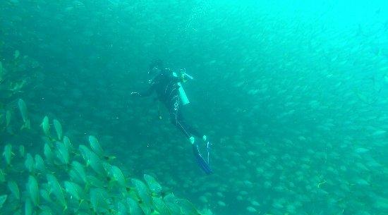 Drake Bay, Kosta Rika: Cano Island