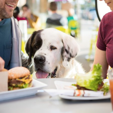 Dog Friendly Hotels San Diego Ca