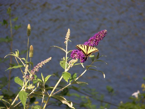 Scottsburg, Орегон: Serenity & wildlife abounds