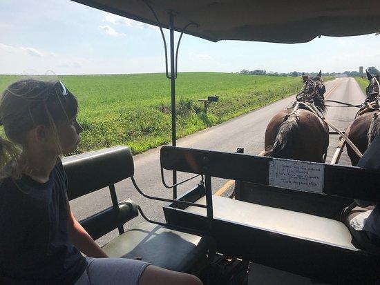 Ed's Buggy Rides: photo0.jpg