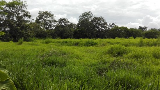San Isidro de El General, Costa Rica: Neighborhood ~ Part of the Rain Forest Walking Tour