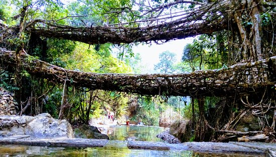 Double Decker Living Root Bridge The Final Destination