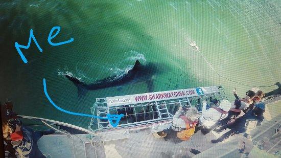 Kleinbaai, Sudáfrica: largest shark 4.6m