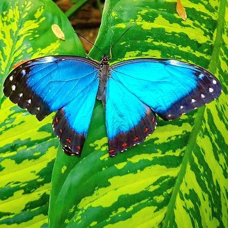 Fjarilshuset (Butterfly House): IMG_20170630_172453_811_large.jpg