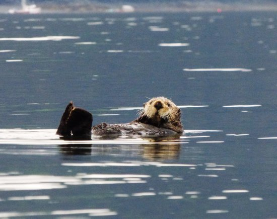Across the Bay Tent and Breakfast: Sea otter kayaking