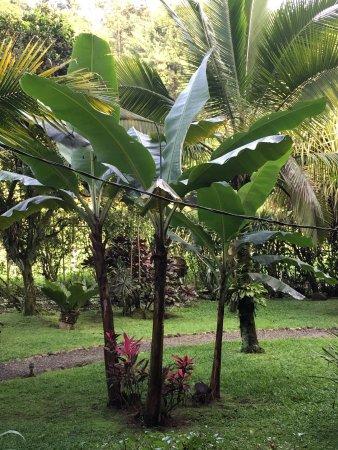 Guapiles, Costa Rica: photo1.jpg