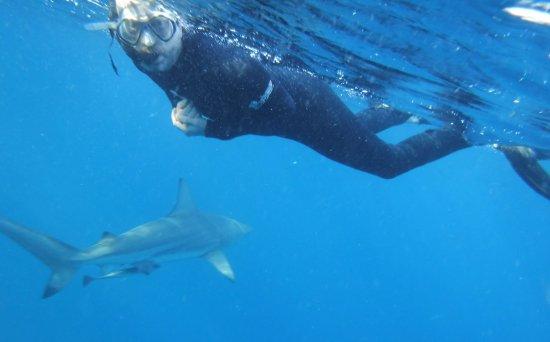 Blue Wilderness Shark Adventures: Great fun!
