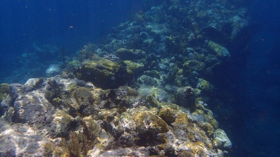 Cabrits National Park, Dominica: Snorkel pic