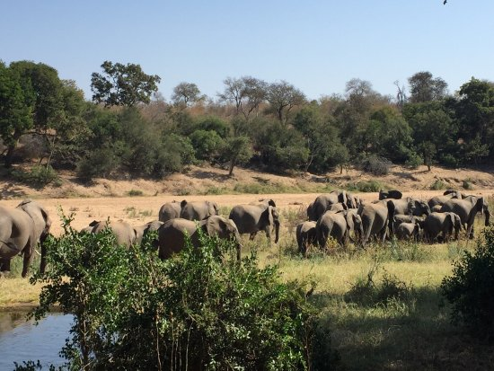 Simbavati River Lodge: Elephants in front of the lodge!