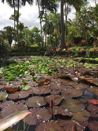 Botanical Gardens of Nevis: photo3.jpg