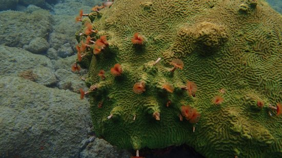 Scotts Head, Dominica: cool coral