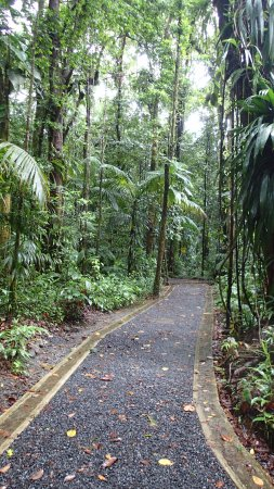 Emerald Pool Nature Trail: easy to follow path