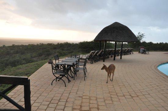 Good first safari experience, but...