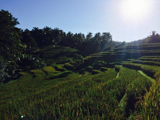 Bali Eco Stay Bungalows : photo5.jpg
