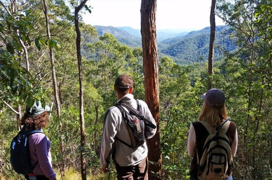 Bushwalkers' Adventure Noosa ...