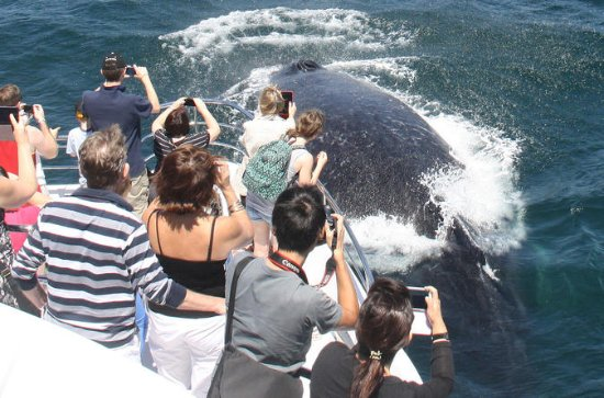 Sea World Whale Watch Cruise på Gold...