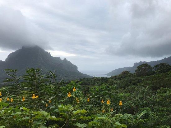 Belvedere Lookout: photo2.jpg