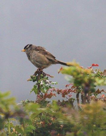 คูปวิลล์, วอชิงตัน: bird