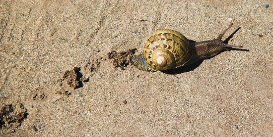 Coupeville, WA: snail