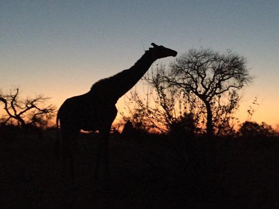 Timbavati Private Nature Reserve, Sudáfrica: photo4.jpg