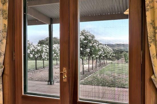 Lyndoch, Australia: View from dining room