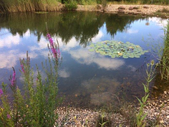 Florsheim, Alemania: Teich am Restaurant