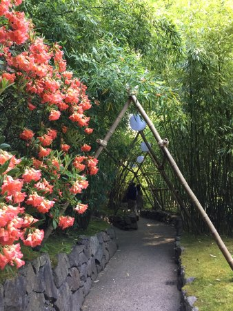 The Butchart Gardens : bamboo forest