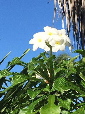 Vaimaanga, Cook Islands: photo6.jpg