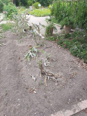 Jardin botanico picture of jardin botanico valencia - Jardin botanico valencia ...