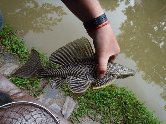 Pai Piranha Fishing Park : photo6.jpg