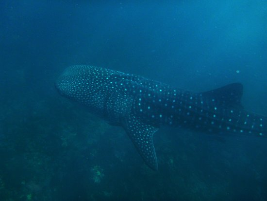 how to go to ningaloo reef