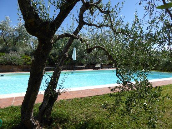 Il Tufo delle Tre Querce: Idyllischer Pool zwischen Lavendel und Olivenbäumen