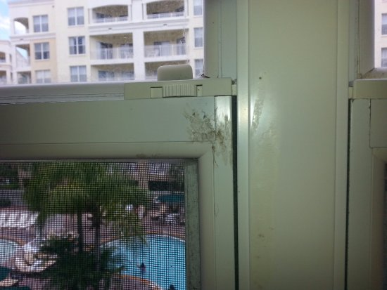 Vacation Village at Parkway: Dirty Windows