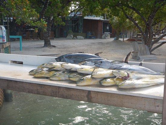 Dirty boat charters islamorada 2017 ce qu 39 il faut for Plenty of fish reviews 2017