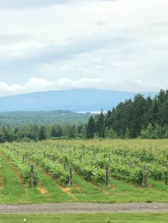 Dunham, Canada: Owner is warm & welcoming  & shared many samples. We got a detailed instruction of how champagne