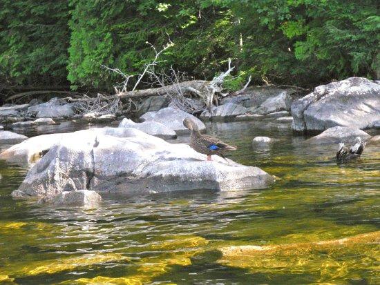 Cozy Moose Lakeside Cabin Rentals: Stay Lakeside Explore Moosehead Lake Nature by canoe or kayak