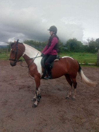 Tralee, Irlanda: Quiet ponies for all levels of horse riding