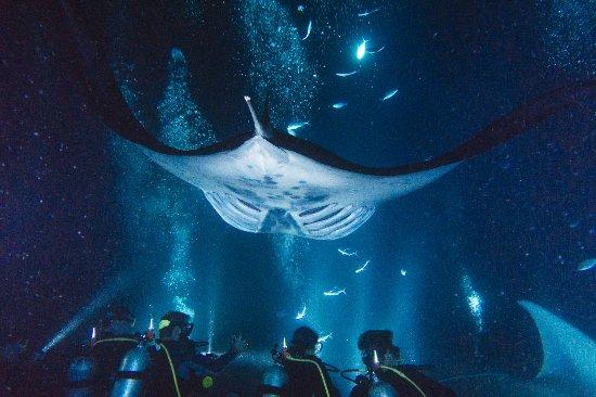 大岛潜水员