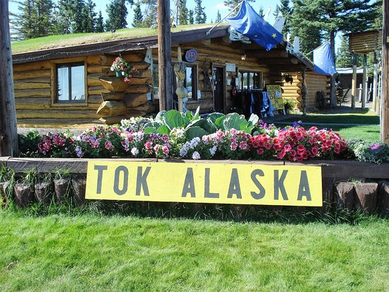 Tok, AK: Gift Shop flower bed.