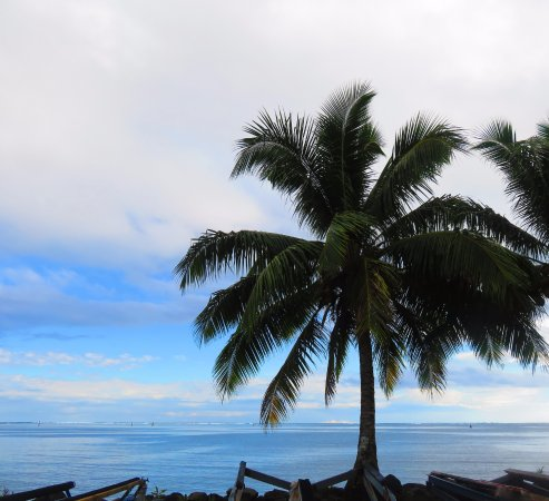 Vanira Lodge: Palm trees by the ocean