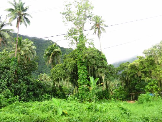 Teahupoo, Frans-Polynesië: The amazing forest surrounding the lodge