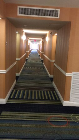 Fairfield Inn & Suites Orlando Lake Buena Vista: photo0.jpg