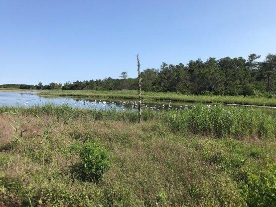 Gordons Pond : photo1.jpg