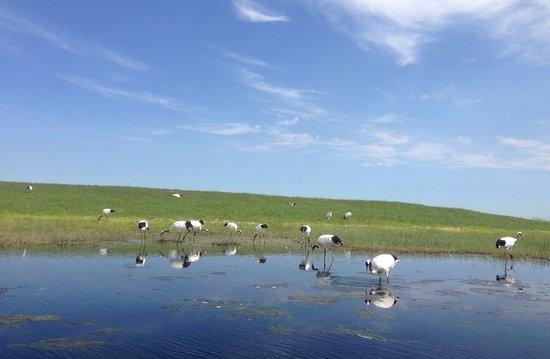 Qiqihar, China: 자룽자연보호구