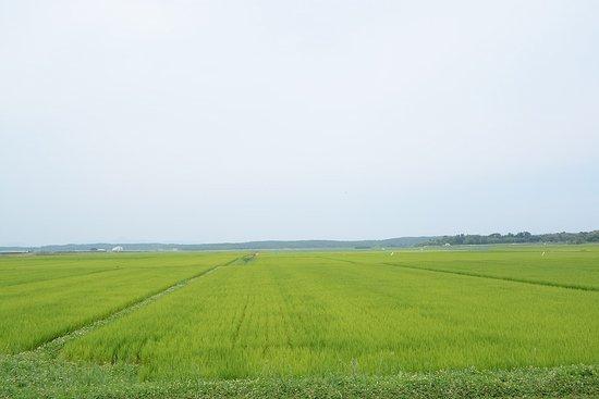 Minamisatsuma-billede