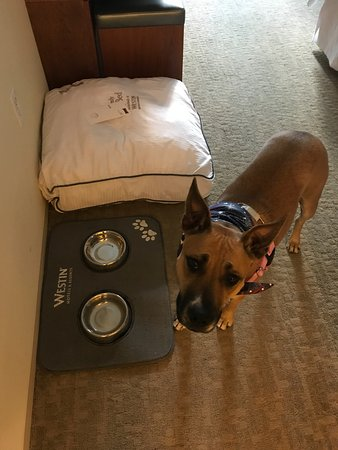 The Westin Palo Alto : Super pet friendly! <3 Our dog had bowls & a bed waiting.