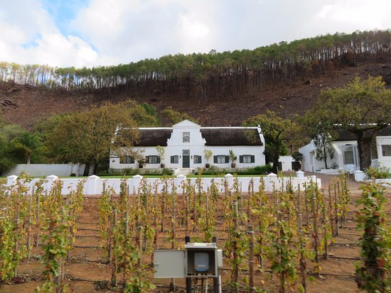 Franschhoek Wine Tram: Rickety Bridge Vineyard