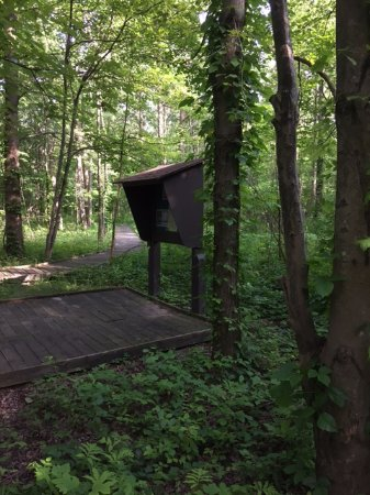 Mansfield, OH: Fowler Woods State Nature Preserve.