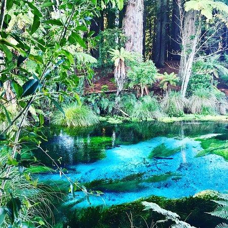Hamurana, Nouvelle-Zélande : photo0.jpg